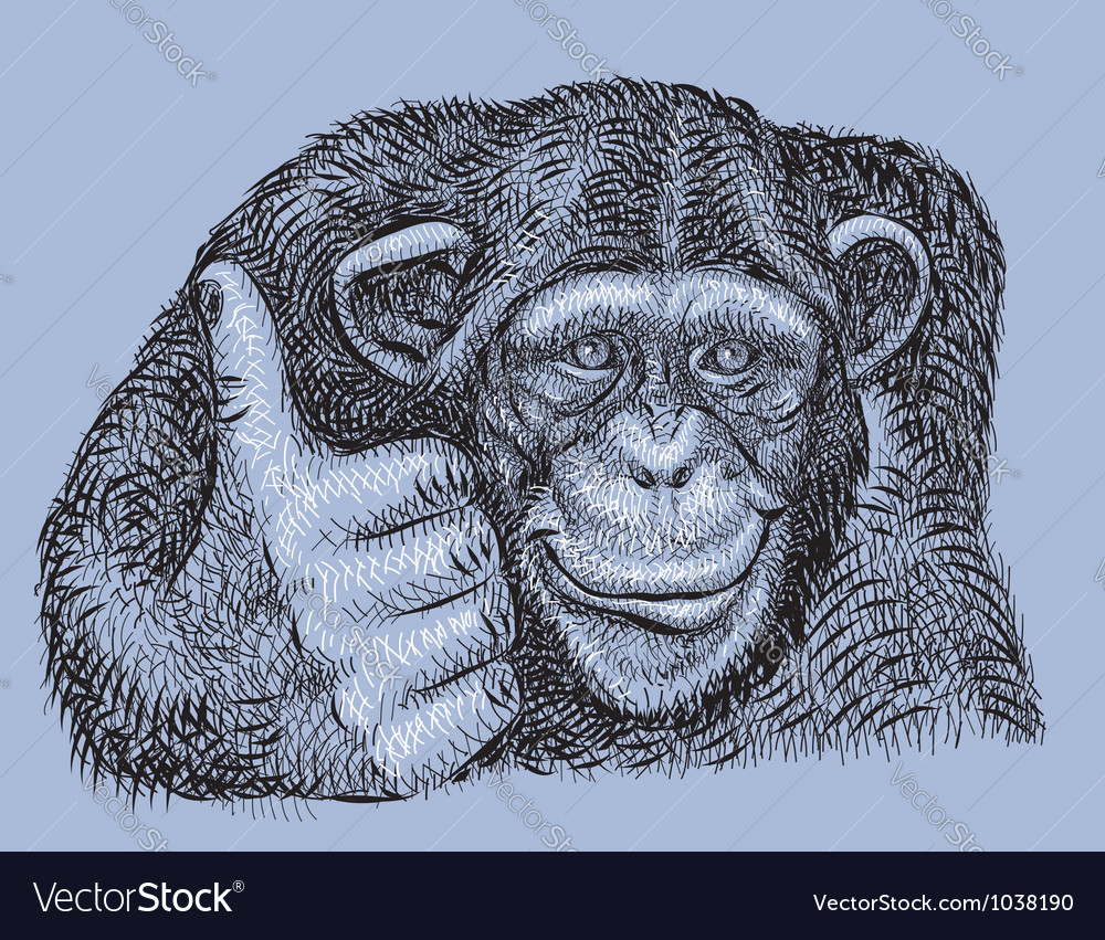 chimpanzee drawing royalty free vector image vectorstock