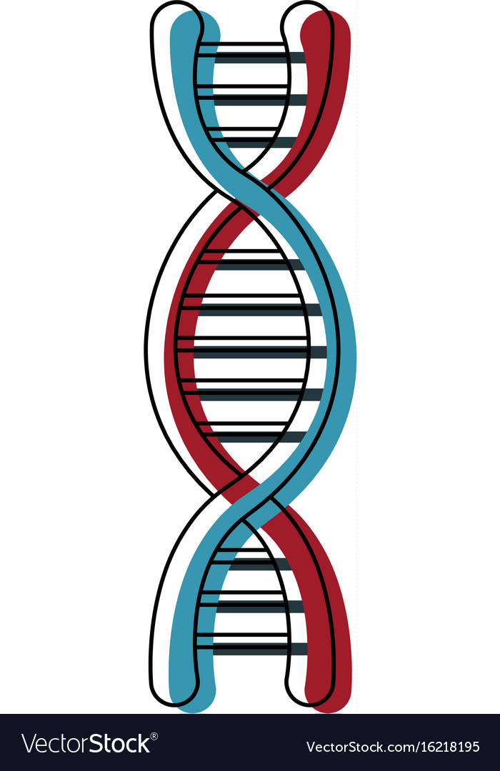 Dna Molecule Structure Science Genetic Structure Vector Image