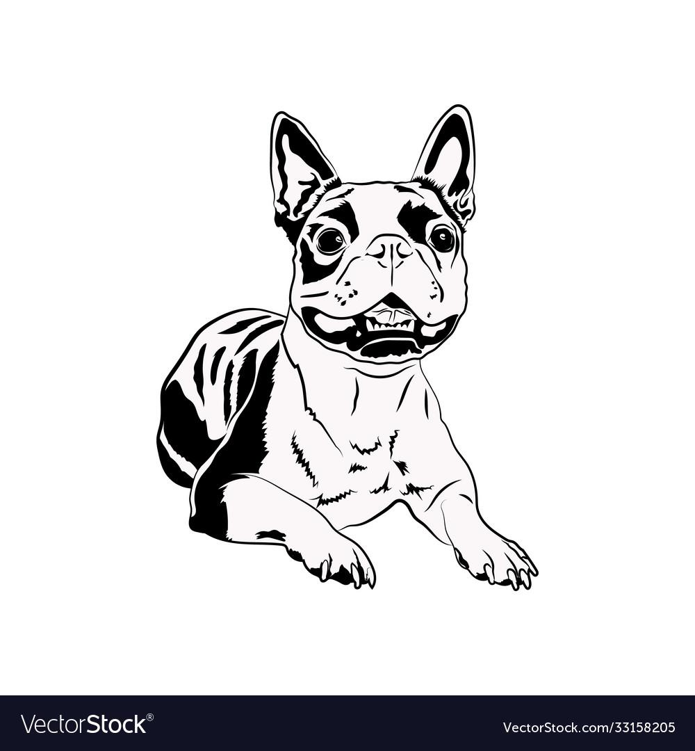 Boston terrier svg cute svg files for cricut dog