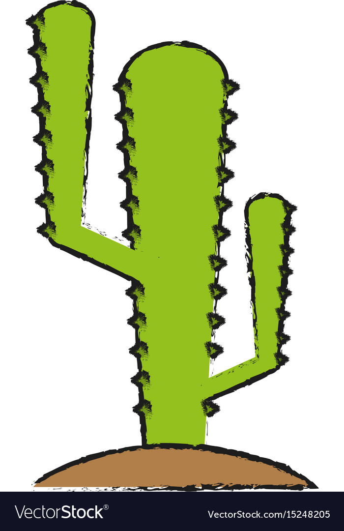 Cactus draw