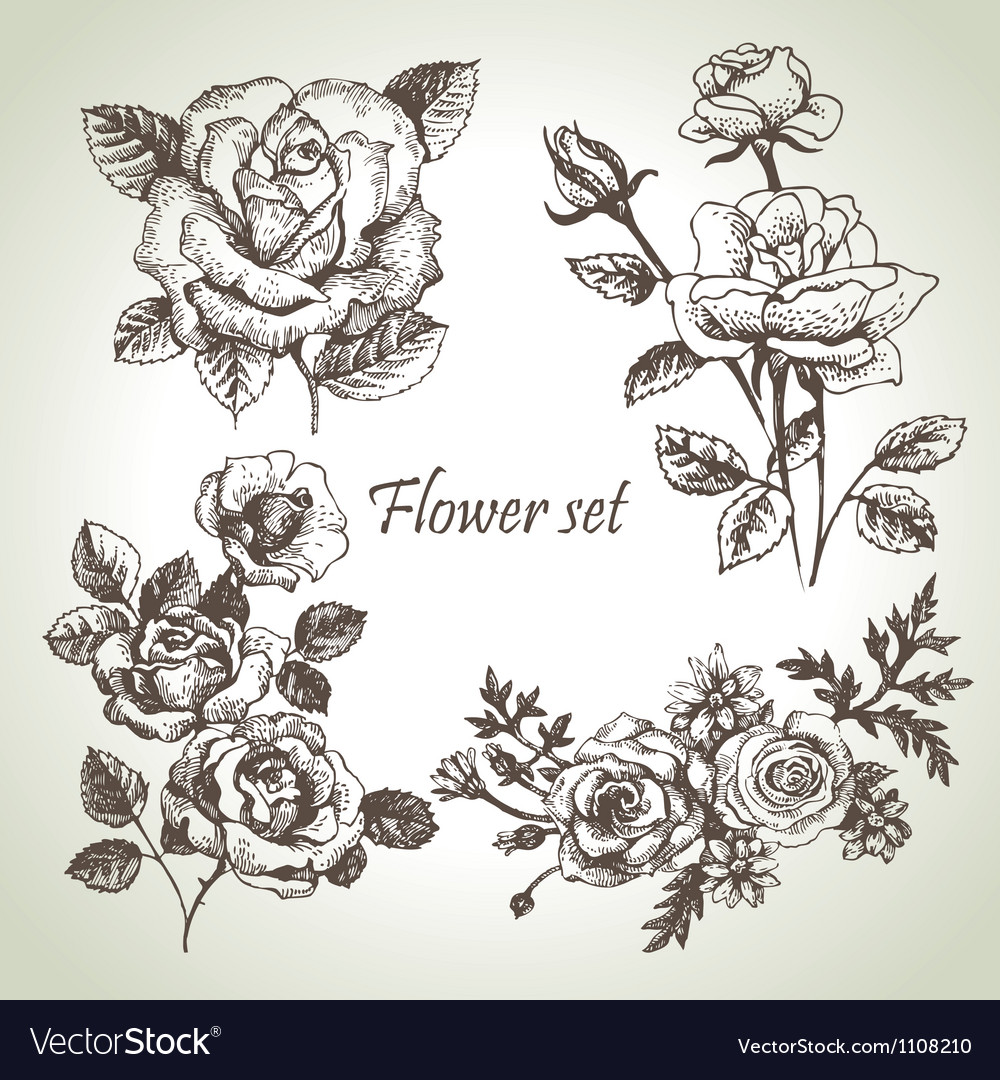 Floral set hand drawn of roses