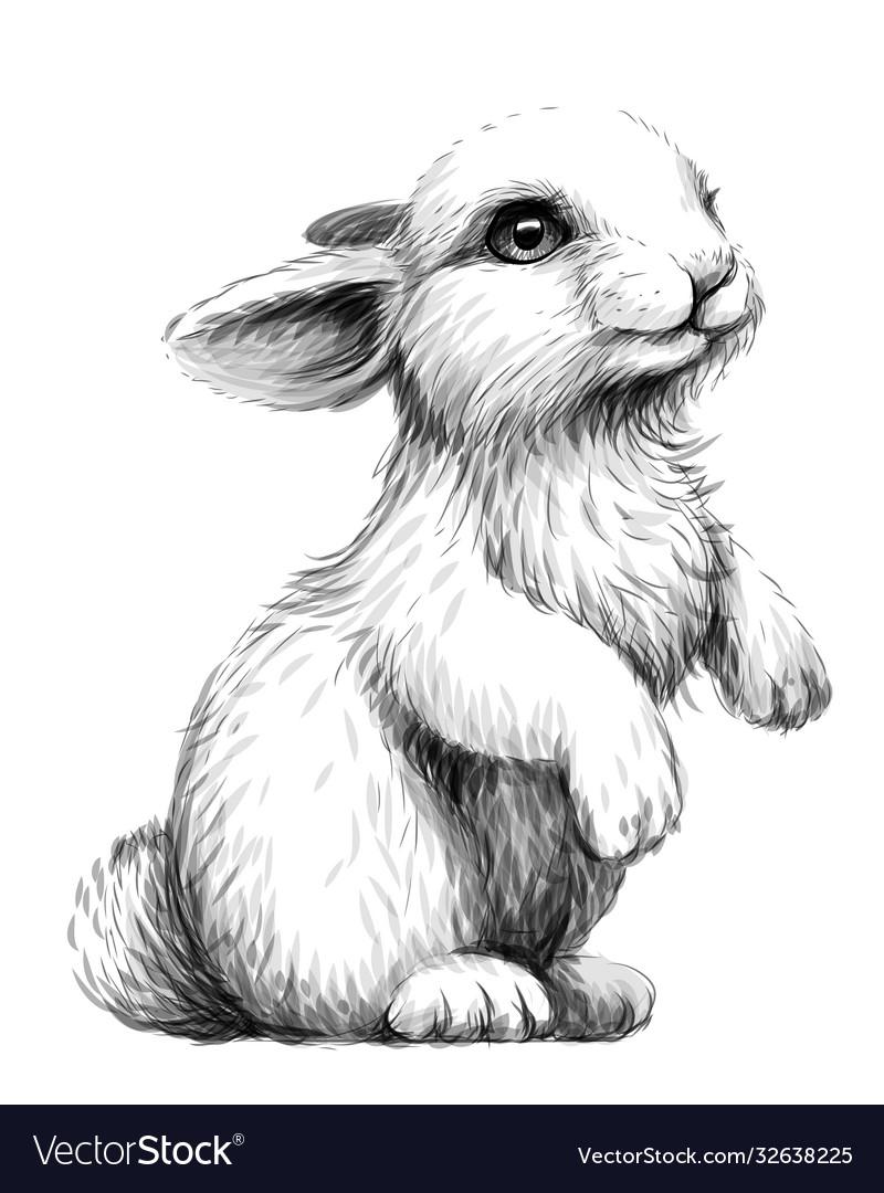 Rabbit sketch artistic graphic image