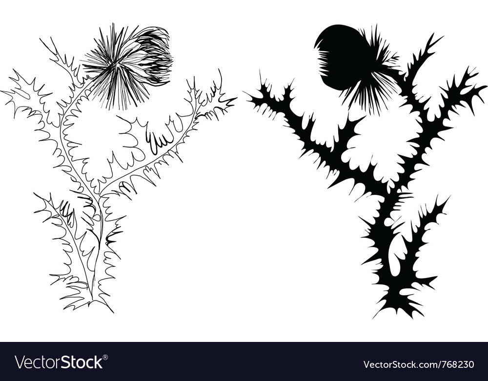 Drawing thistle vector image