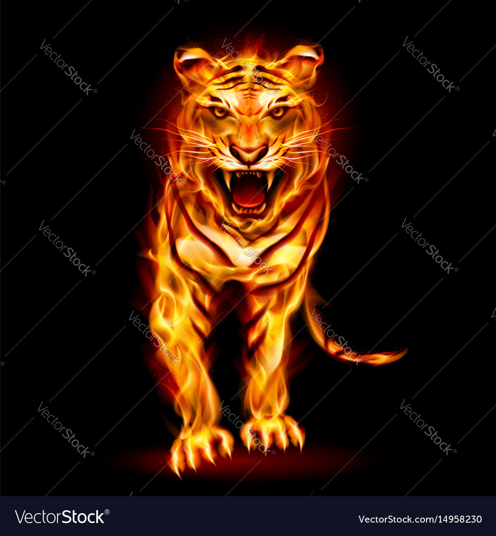 fire tiger on black background for design vector image