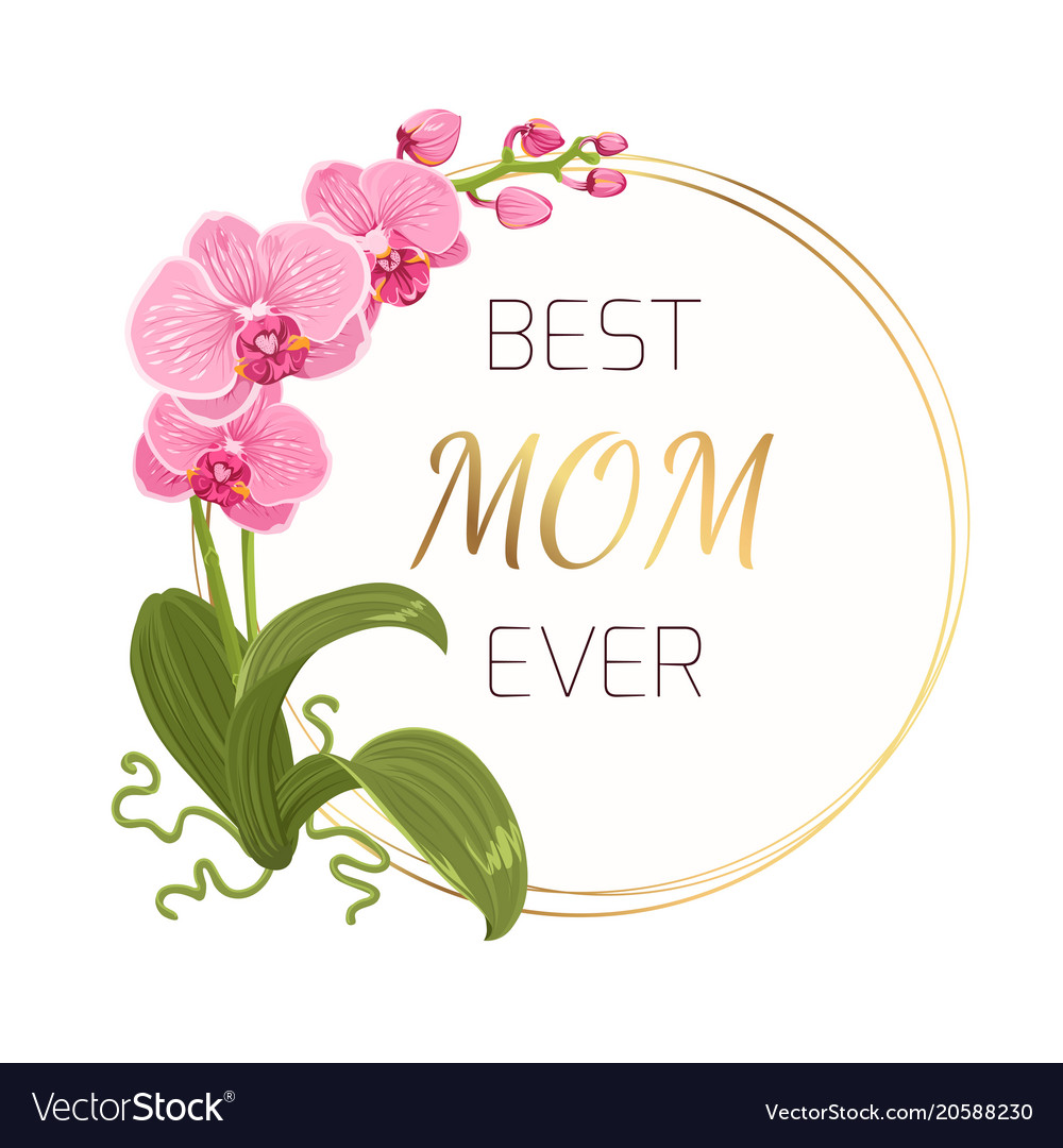 Mothers Day Greeting Card Pink Orchid Gold Wreath Vector Image