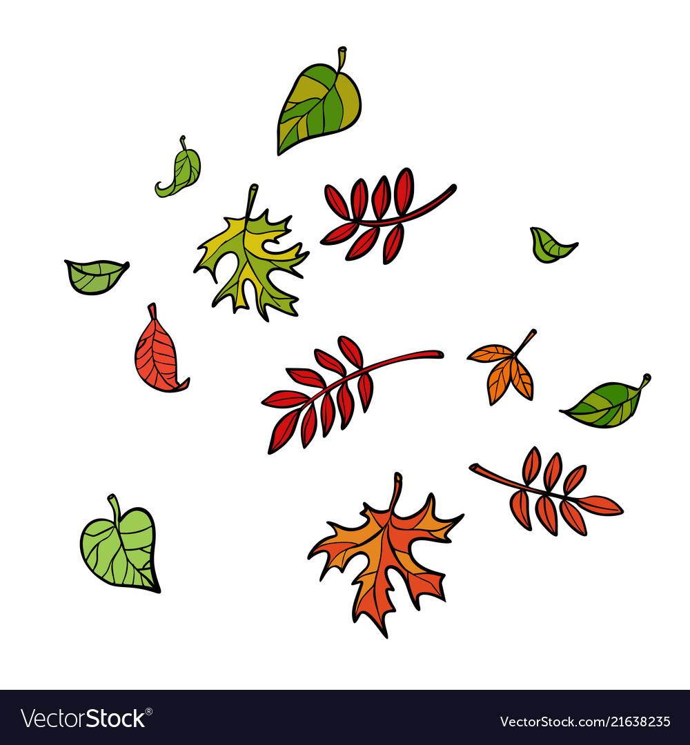 Autumn leaves nature trees