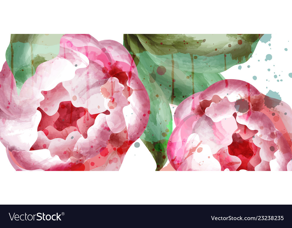Peony flowers watercolor wedding