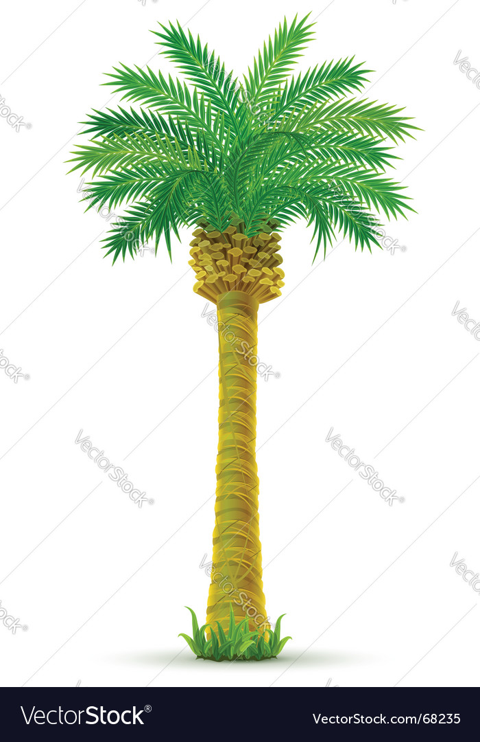 tropical palm tree royalty free vector image vectorstock