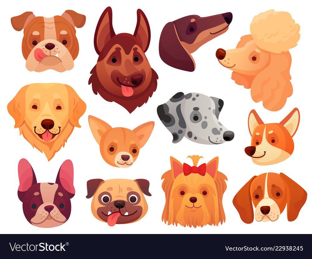 Cute dog face puppy pets dogs animals breed and