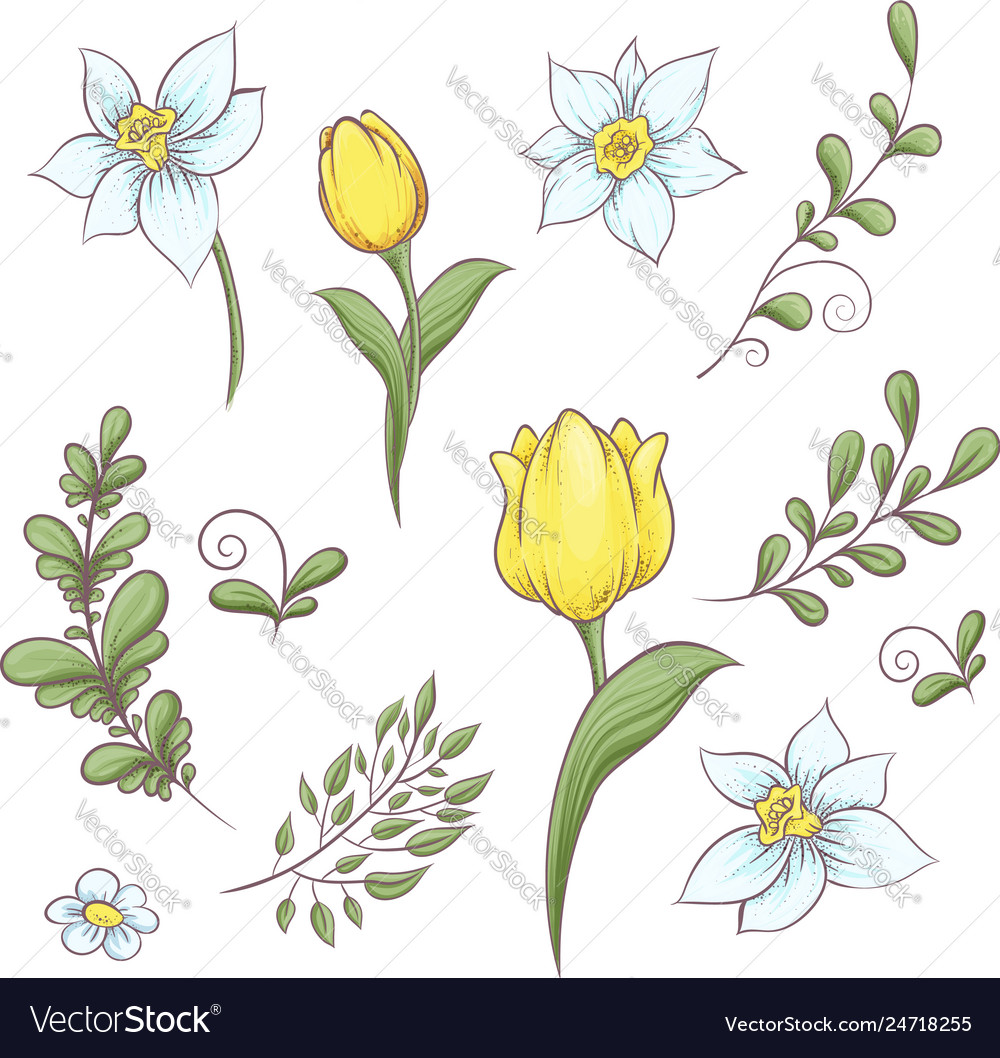 Set flowers tulips hand drawing