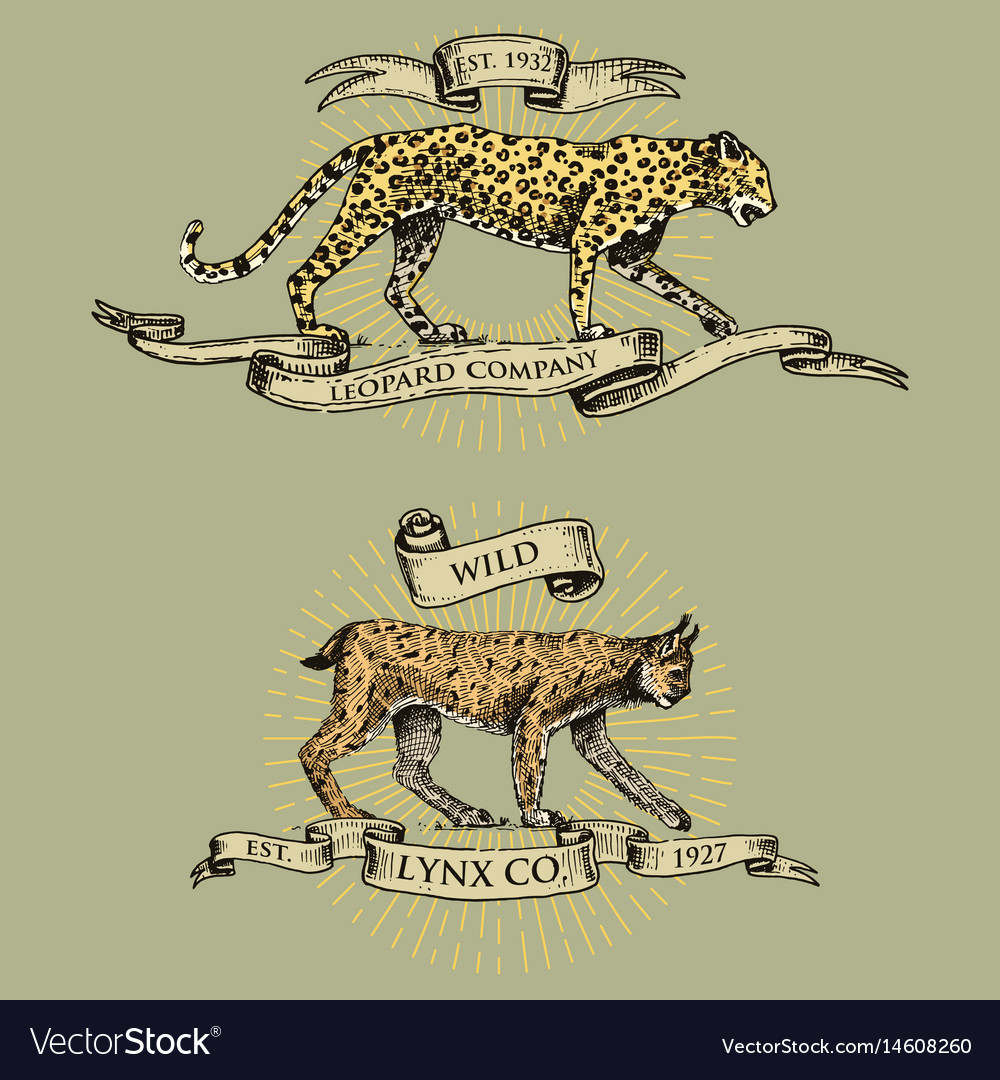 Leopard and lynx logos emblems or badges with vector image