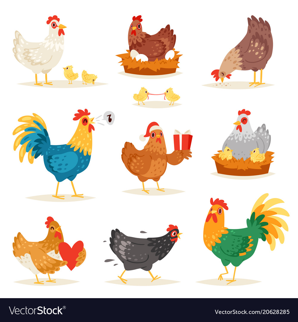 Chicken cartoon chick character hen and Royalty Free Vector