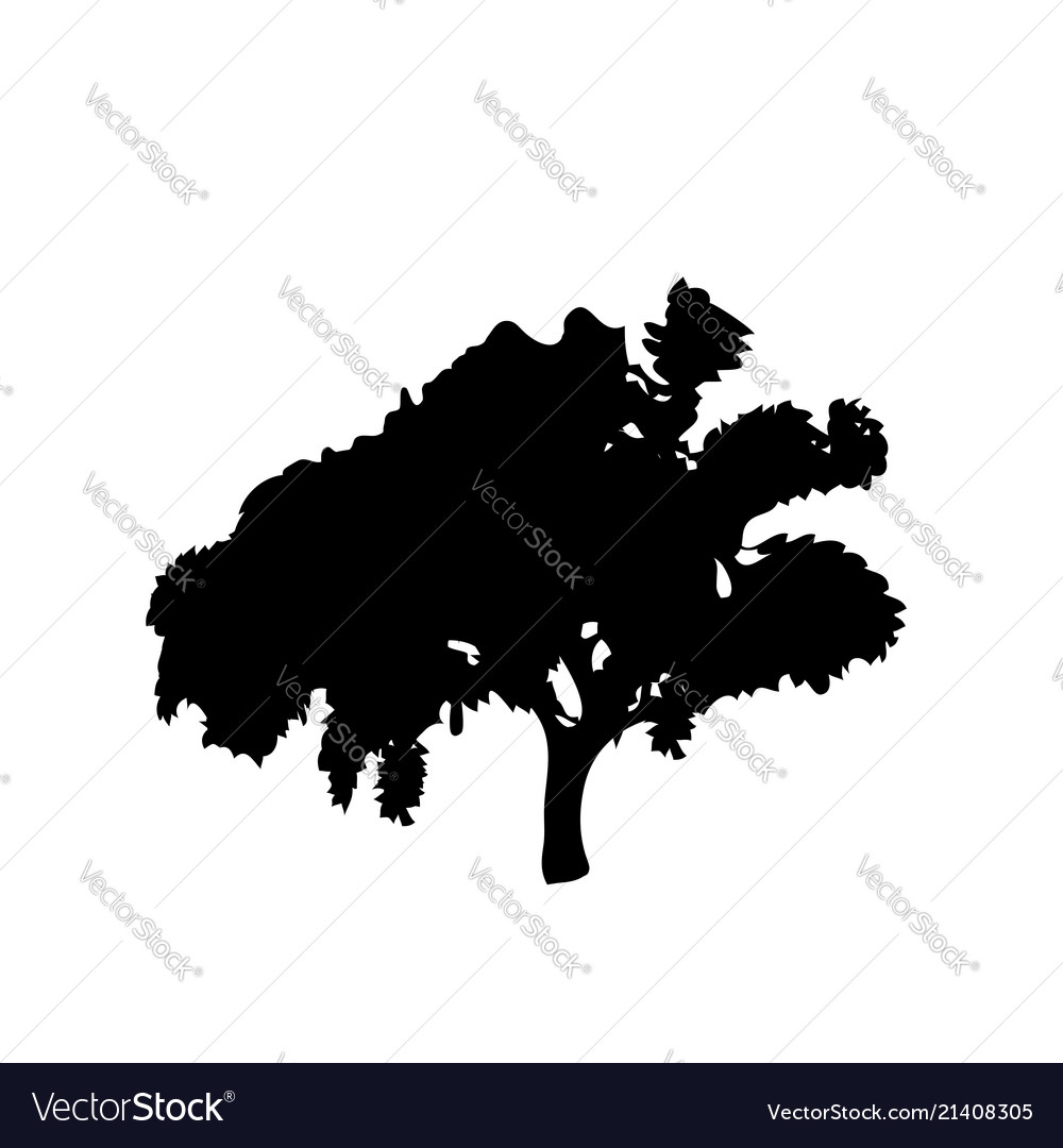 Black silhouette of leafed tree isolated on white