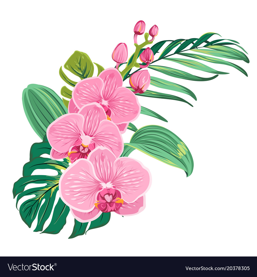Flowers orchid bouquet with tropical leaves vector image izmirmasajfo