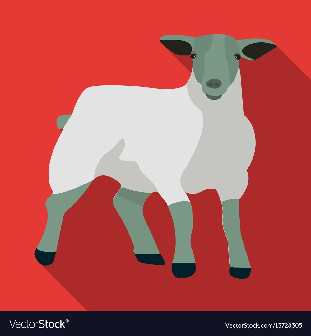 Little white mountain sheepscottish fold sheep