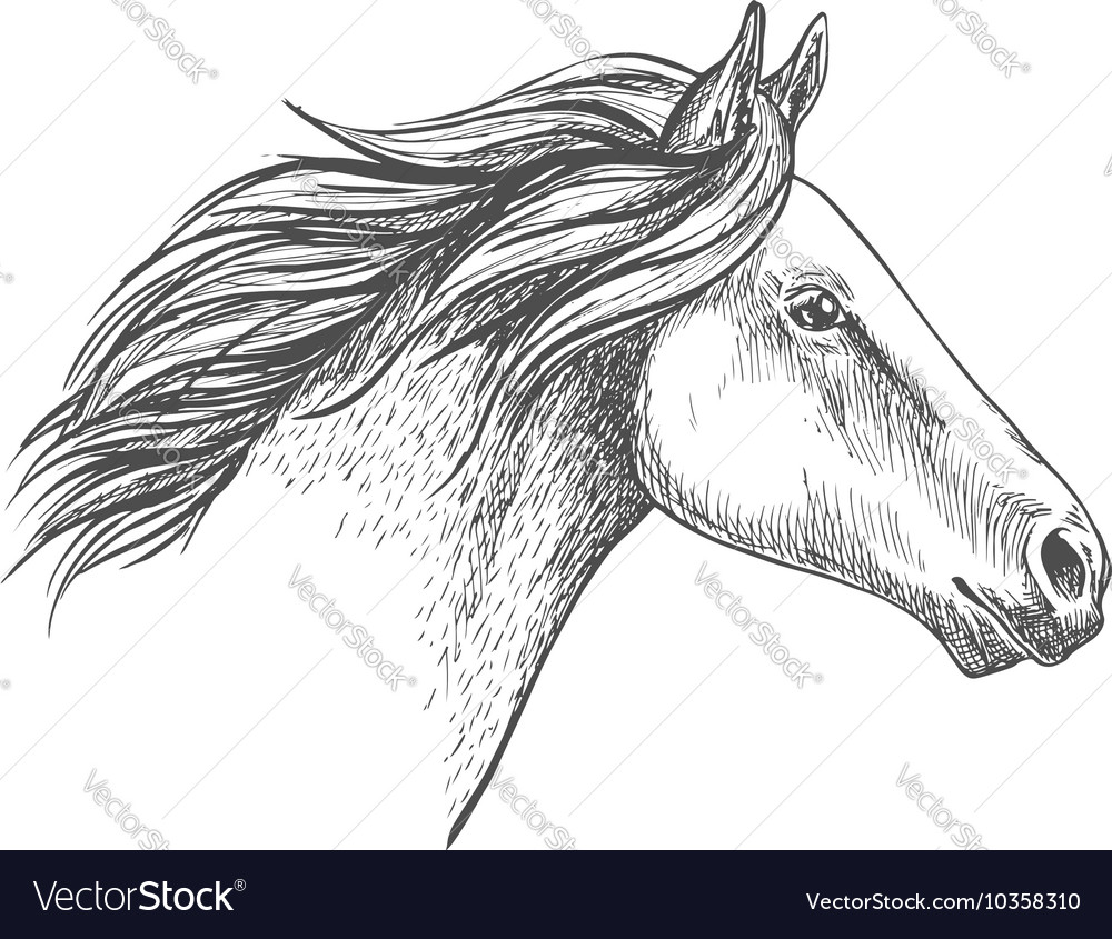 White horse pencil sketch portrait vector image