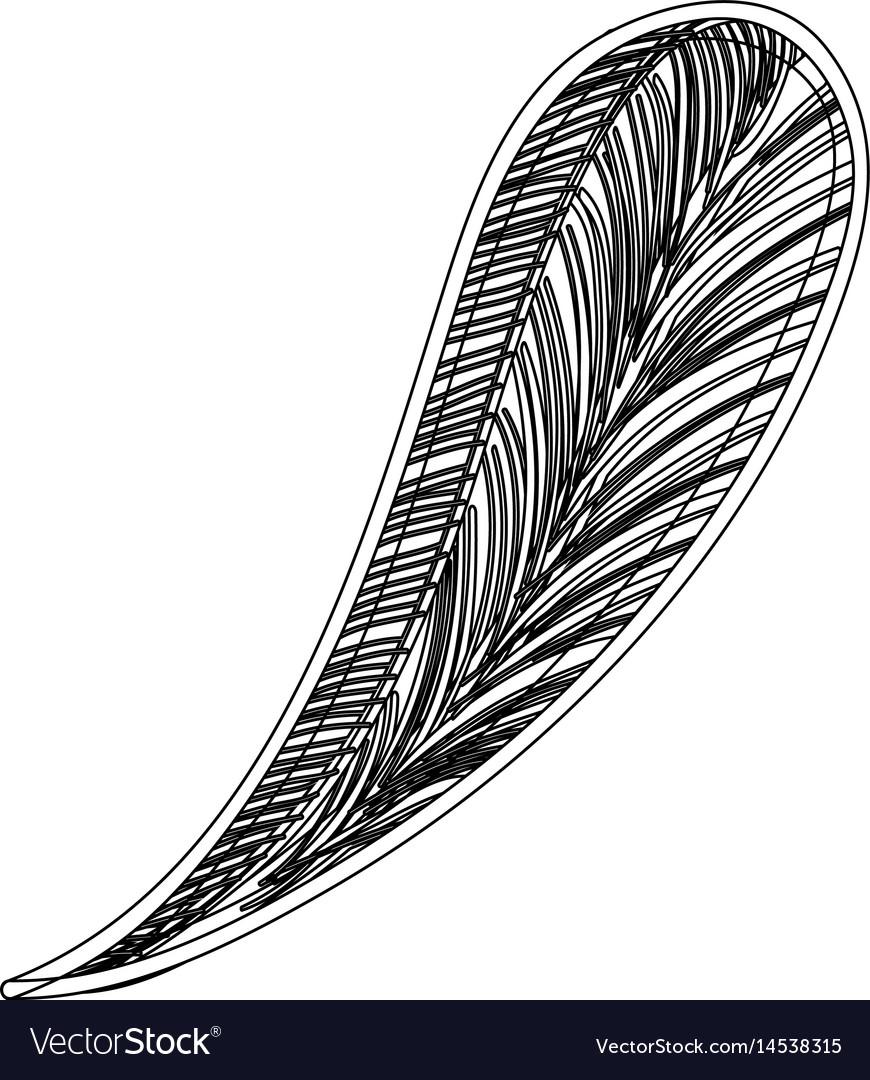 Contour leaf of natural plant herb botany vector image