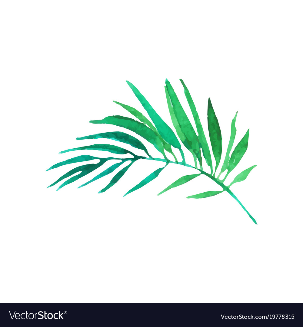 Green areca palm tree leaf hand drawn watercolor vector image
