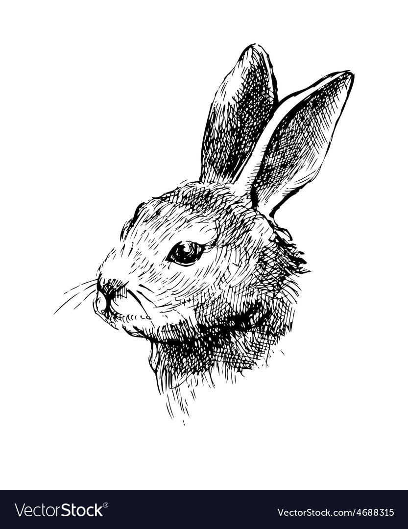 Hand drawn rabbit on white