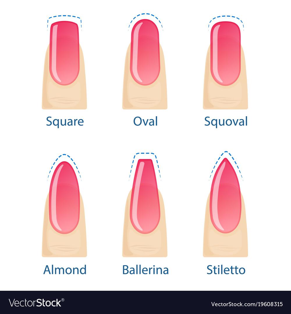 Set of nails shapes Royalty Free Vector Image - VectorStock