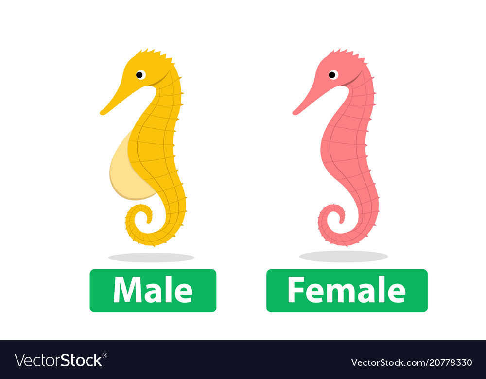 Side view male and female seahorse cartoon