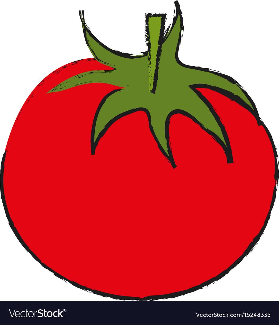 Tomato food draw vector image