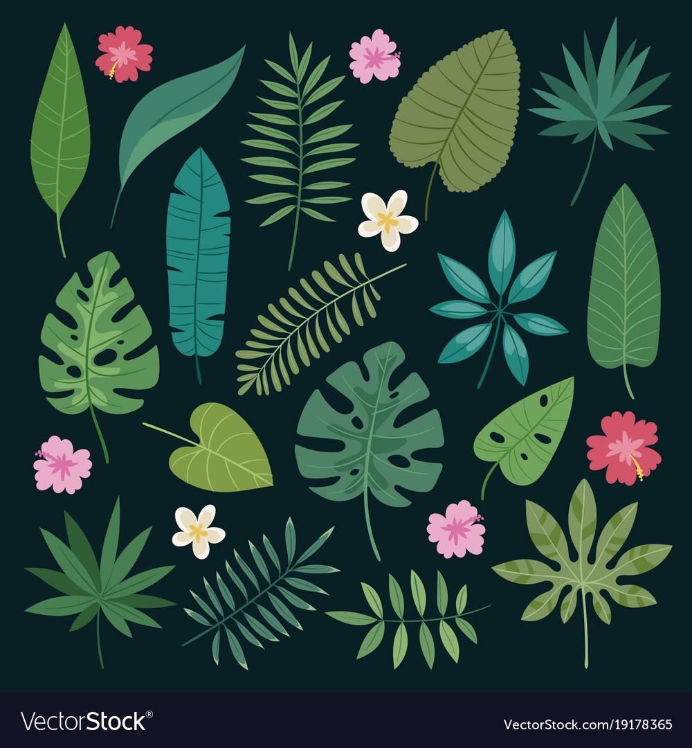 Tropical leaves flowers tropic hibiscus