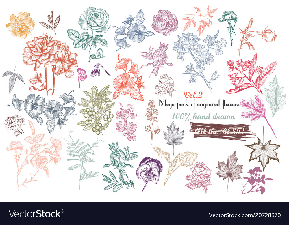 Mega collection of high detailed flowers vector image