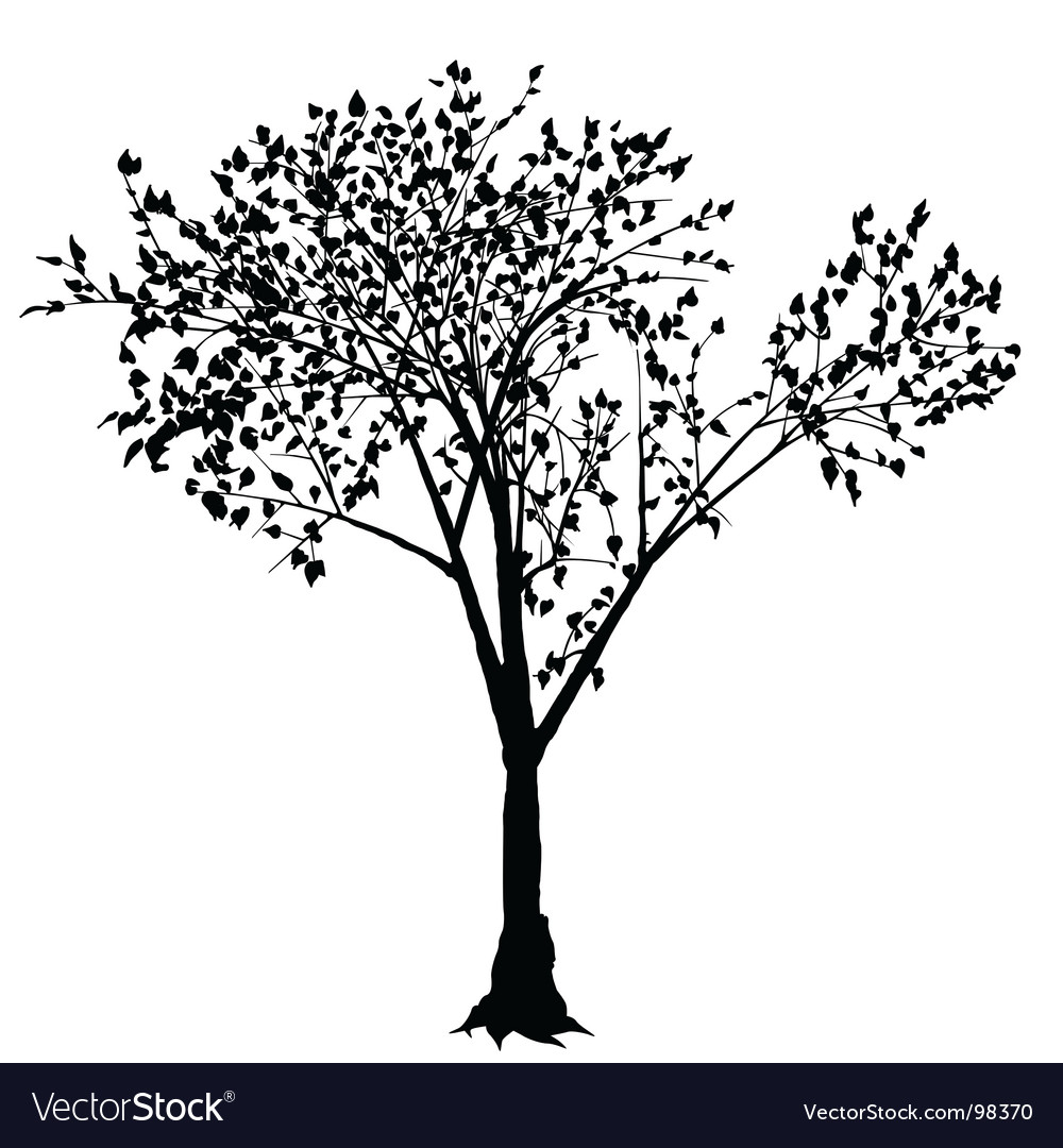 tree silhouette royalty free vector image vectorstock rh vectorstock com tree silhouette vector art palm tree silhouette vector