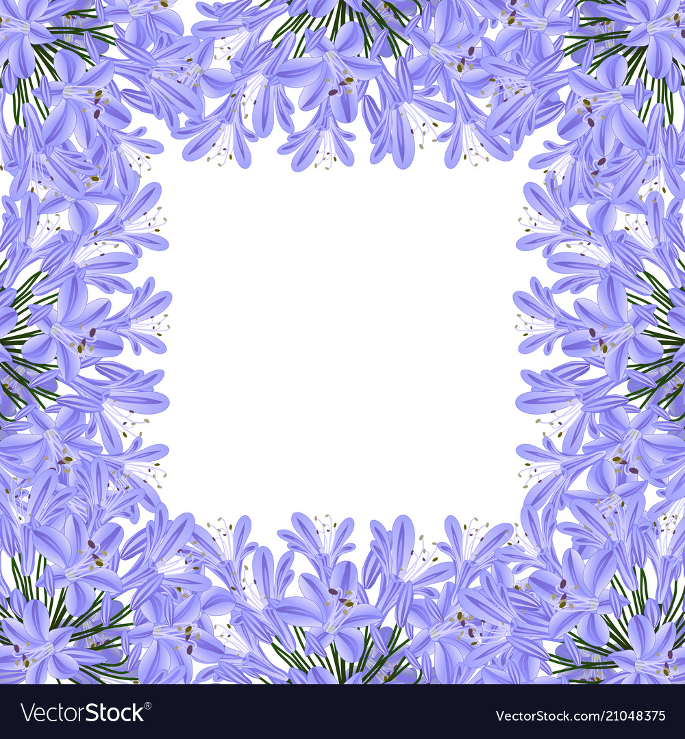 Blue Purple Agapanthus Border Lily Of The Nile Vector Image