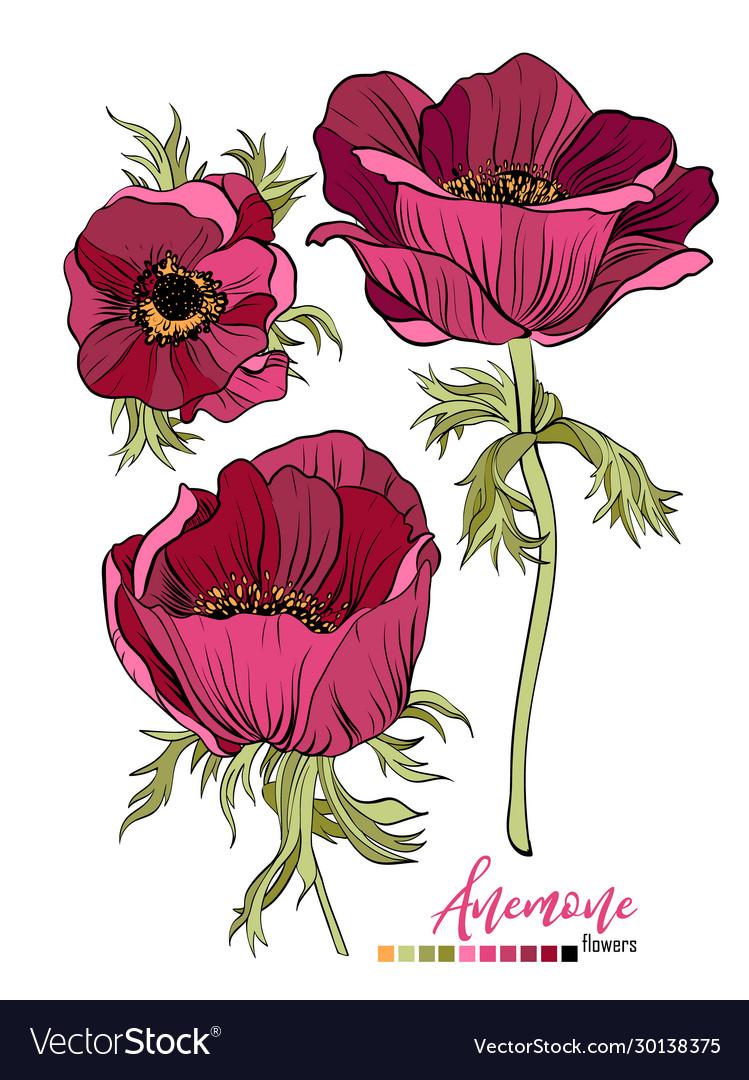 Burgundy Floral Boho Wedding Vector Images 71