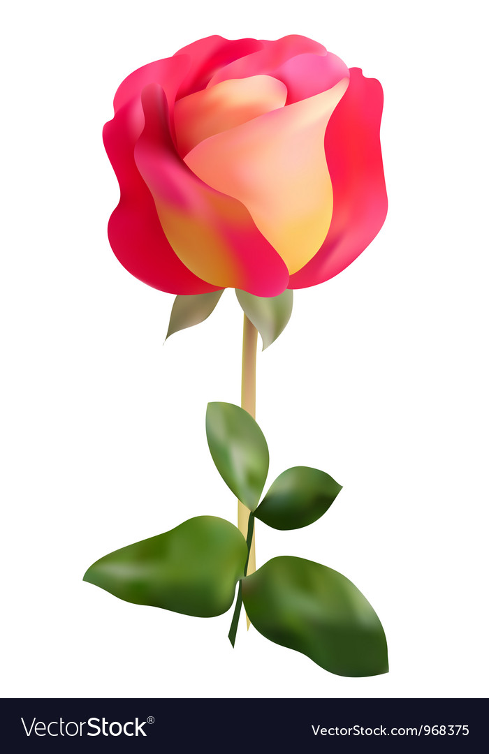 Pink yellow rose royalty free vector image vectorstock pink yellow rose vector image mightylinksfo