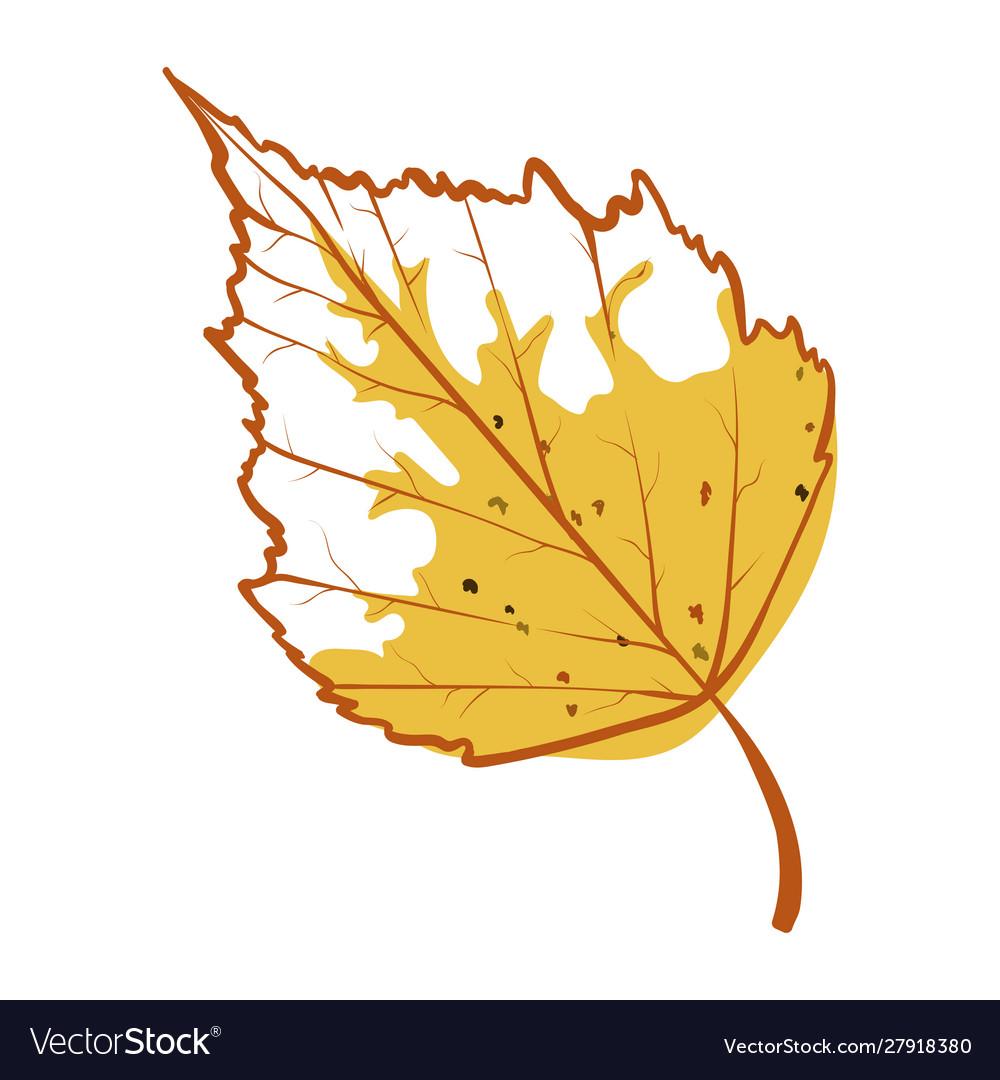 Birch autumn leaf icon seasonal yellow foliage
