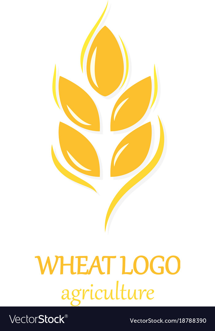Agriculture wheat logo icon design template