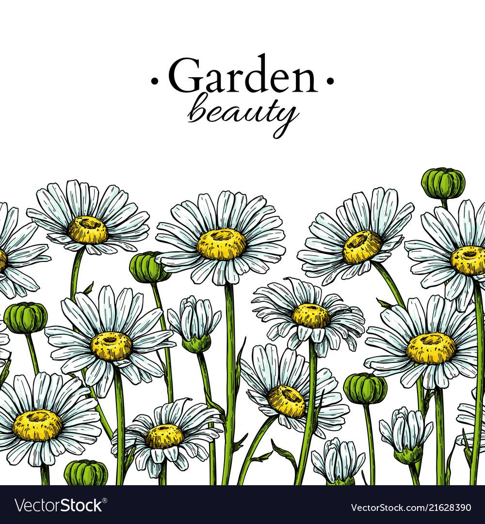 Daisy flower border drawing hand drawn royalty free vector daisy flower border drawing hand drawn vector image izmirmasajfo