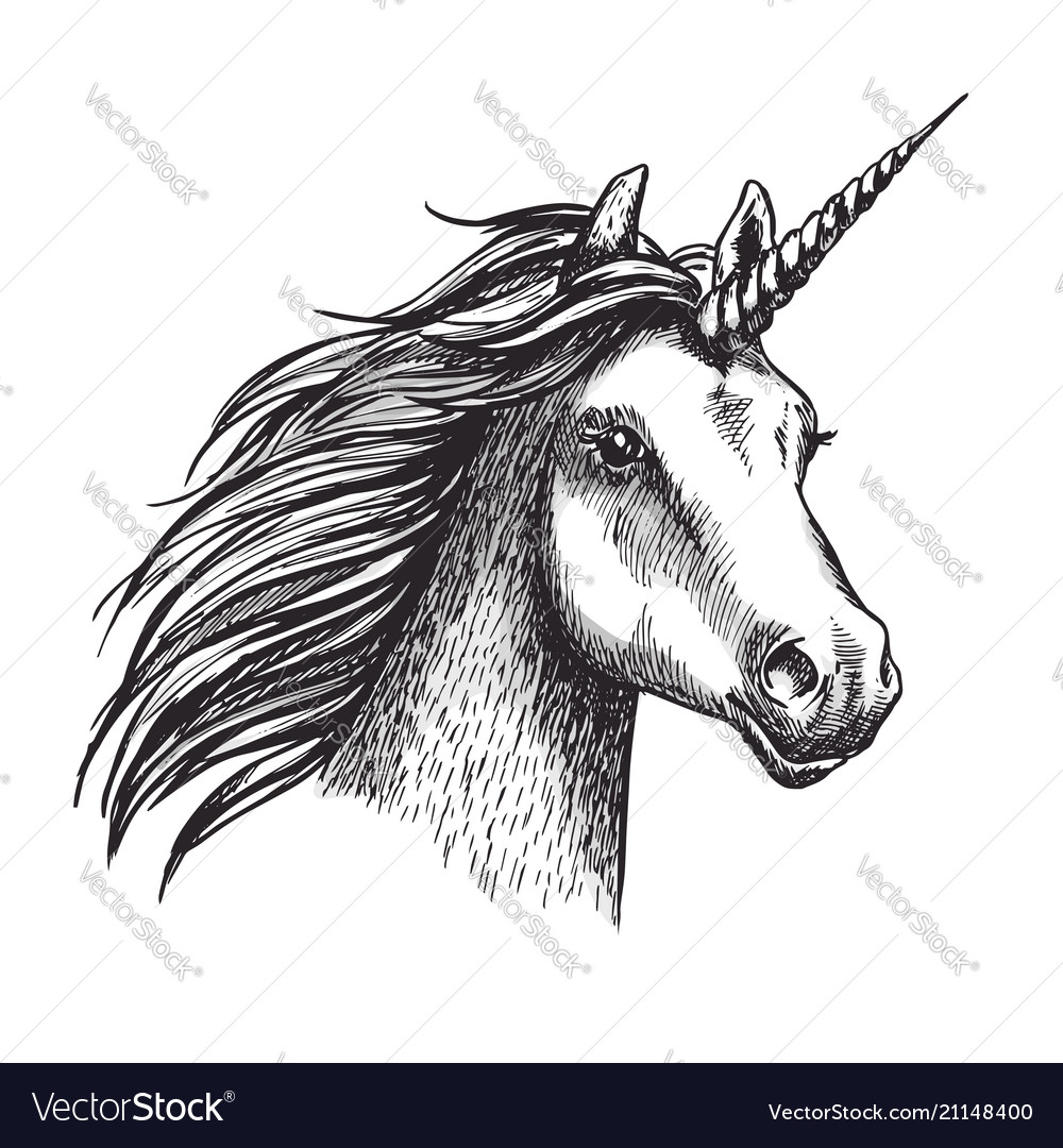 Unicorn Sketch Mystic Magic Horse Royalty Free Vector Image