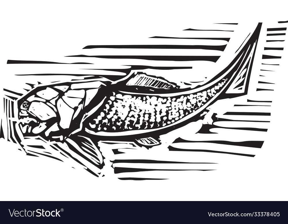 Dunkleosteus fossil fish