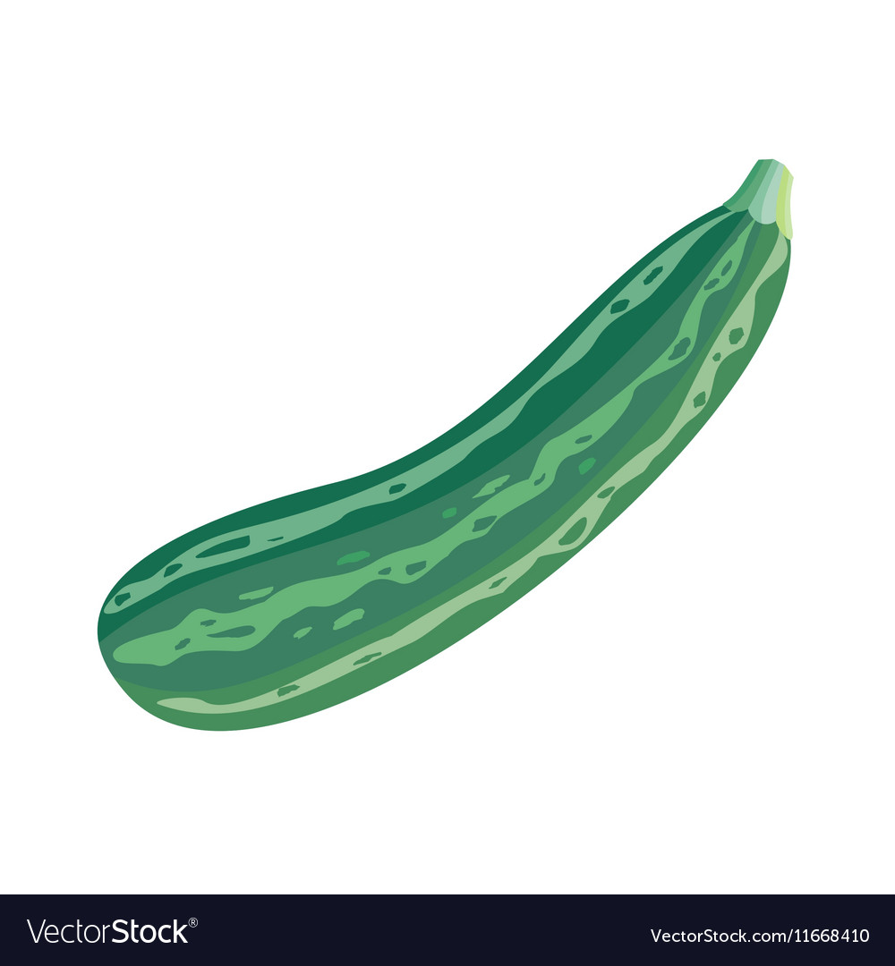 Fresh Vegetable Marrow Oblong Green Squash