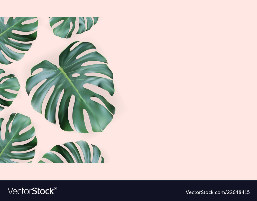 Realistic green tropical monstera leaves from top