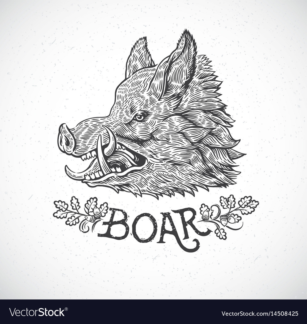 Boar head in graphic style hand drawn
