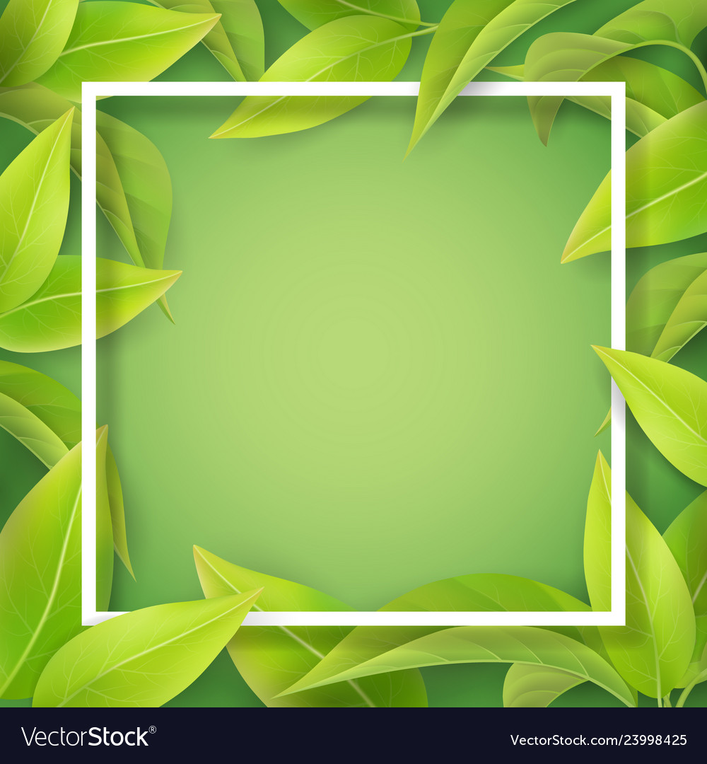 Green mellow leaves and white frame
