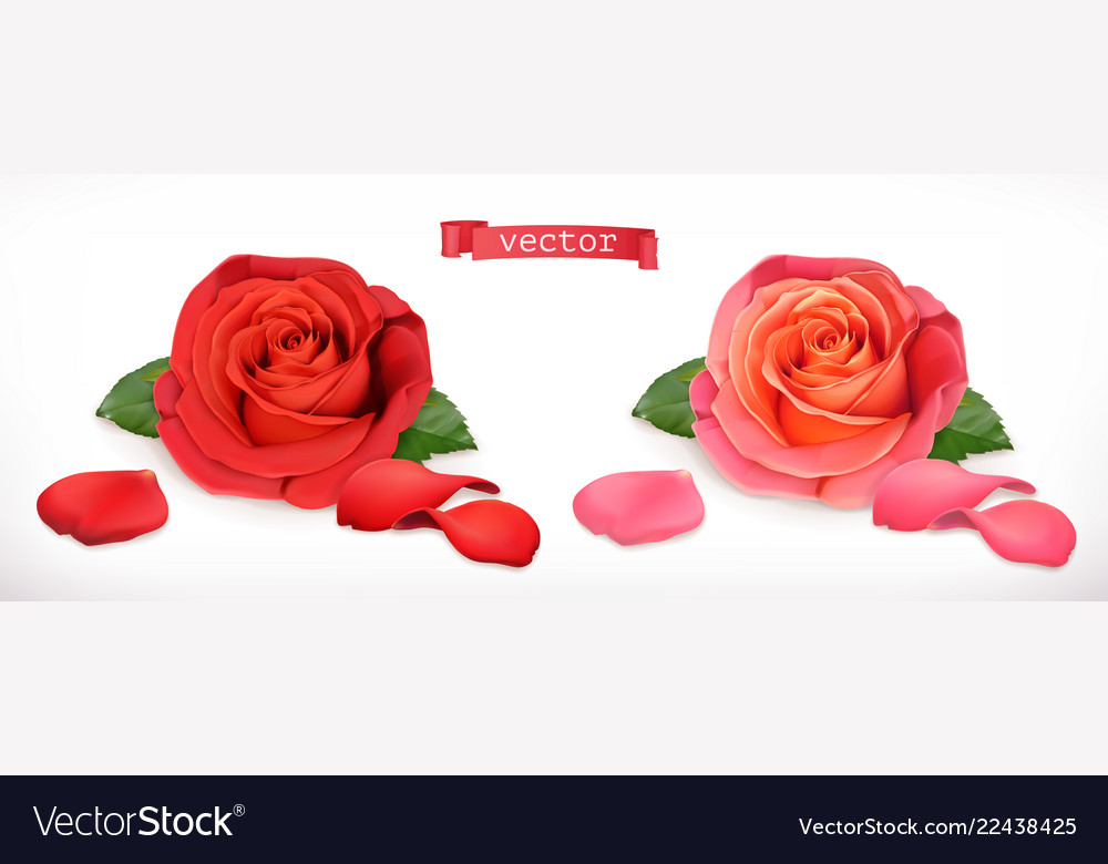Rose flower 3d realistic icon