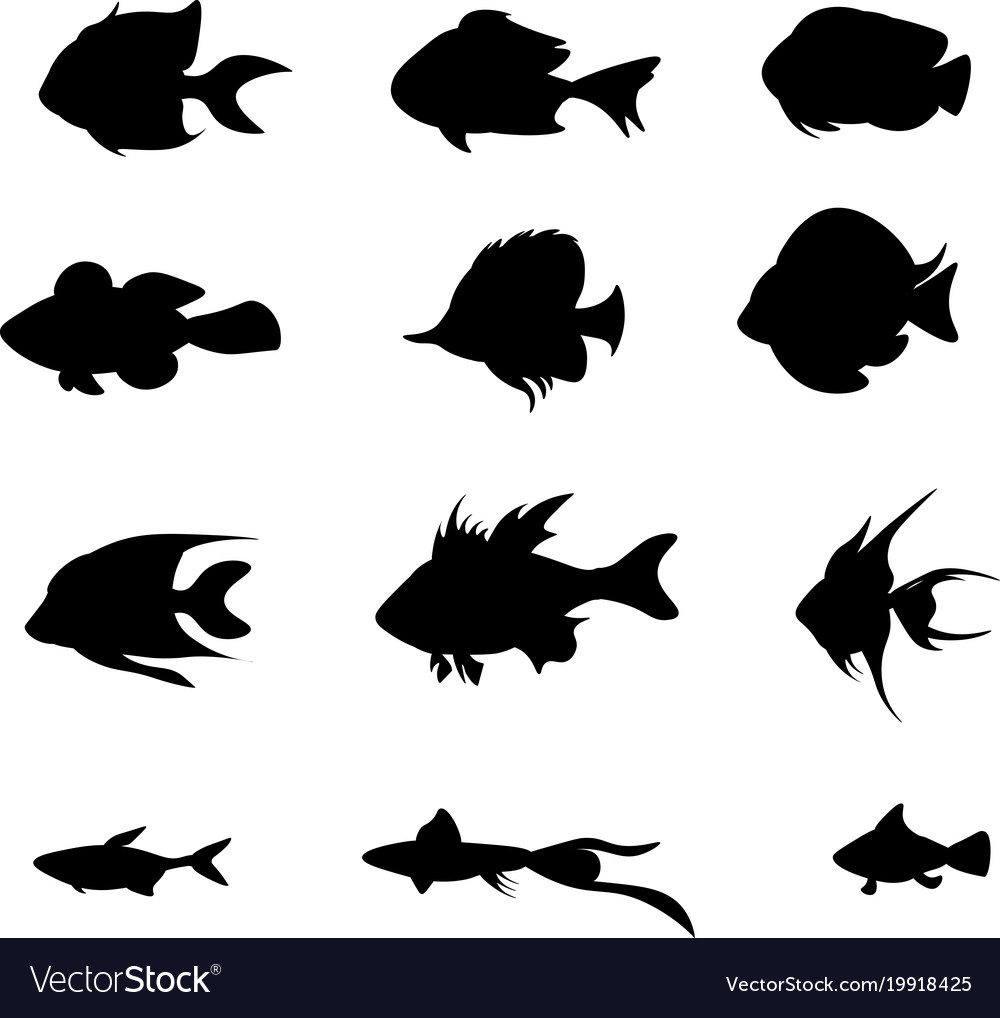 Set black fish isolated on the white