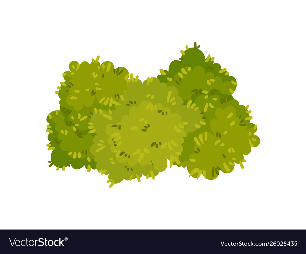 Bushes Are Located Close To Each Other Royalty Free Vector