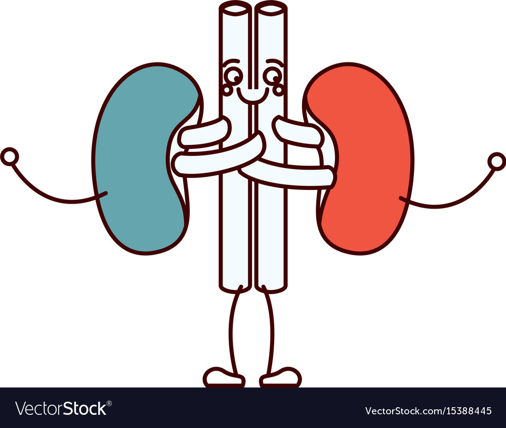 Color sections silhouette caricature renal system Vector Image