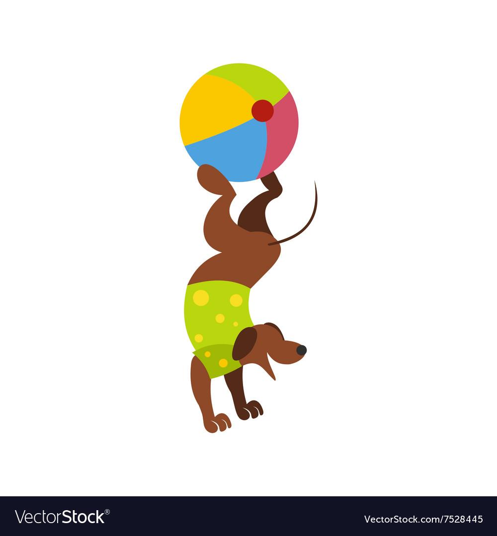 Dog ball balancing act icon vector image