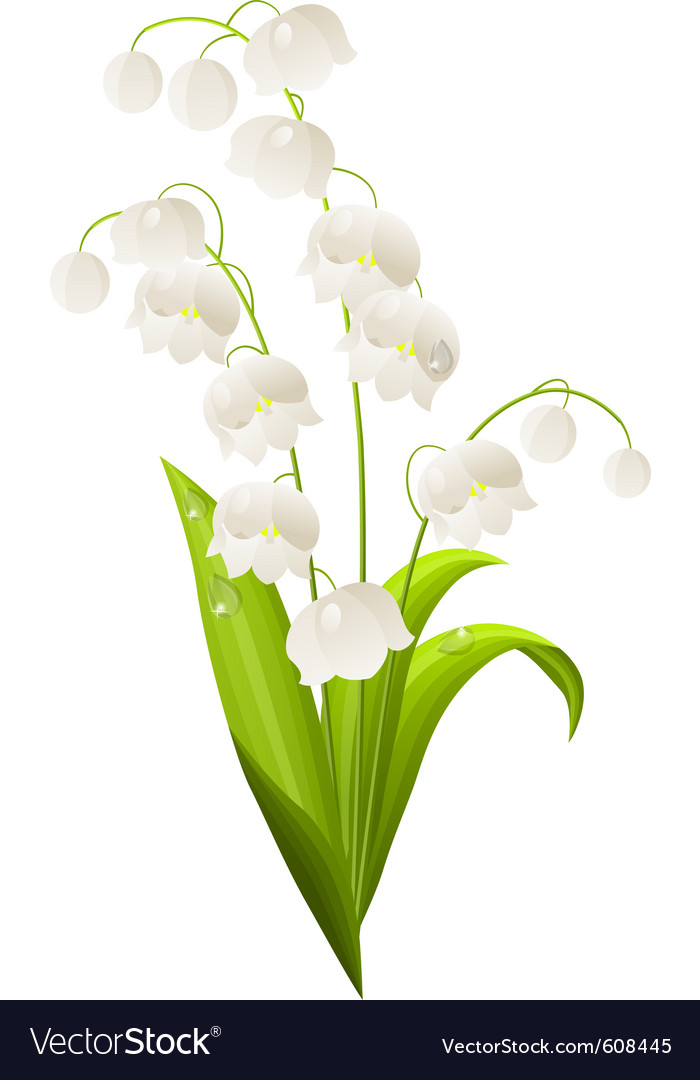 Lily Of The Valley Isolated Royalty Free Vector Image