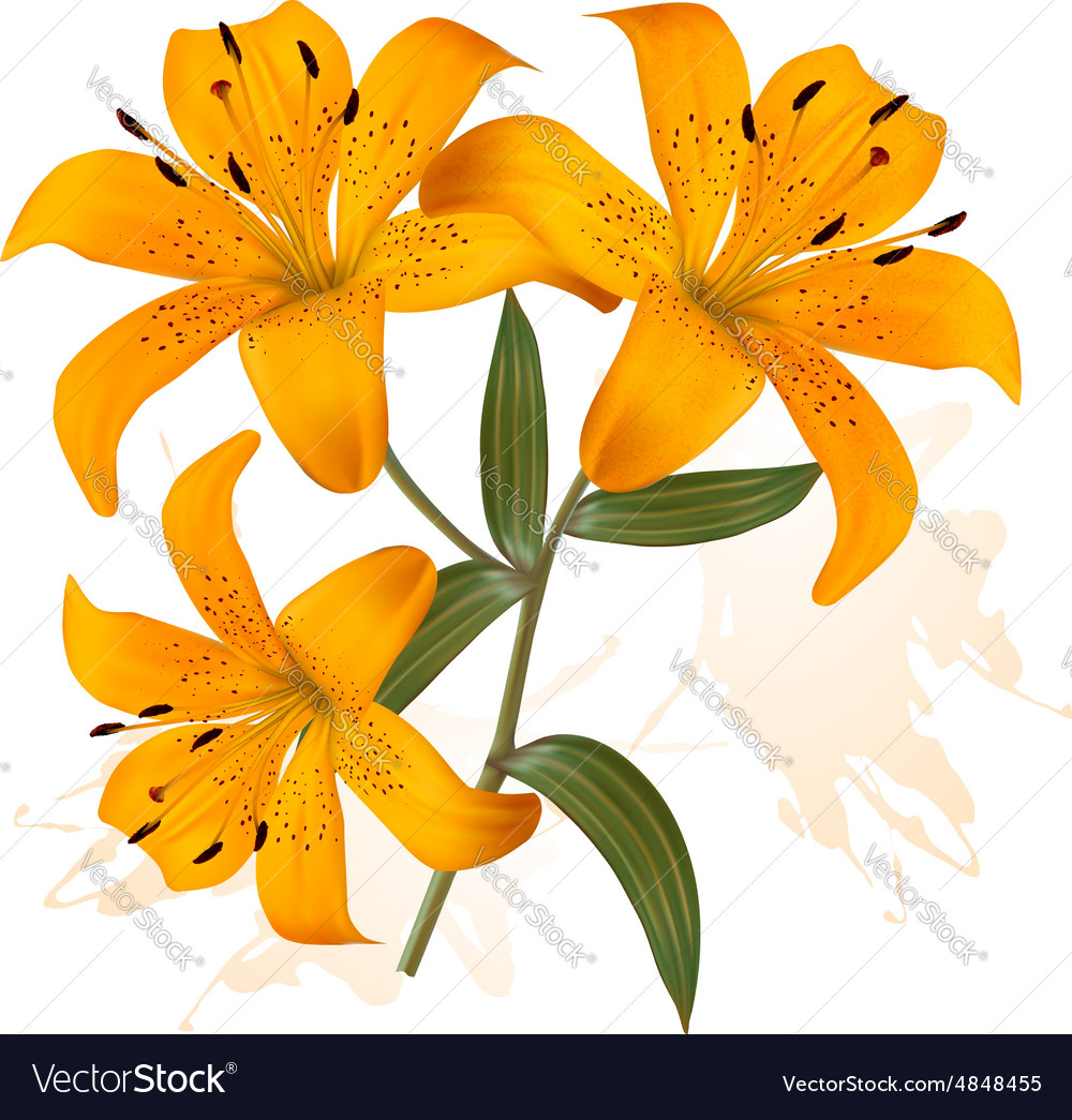 Flower background with three beautiful lilies vector image izmirmasajfo