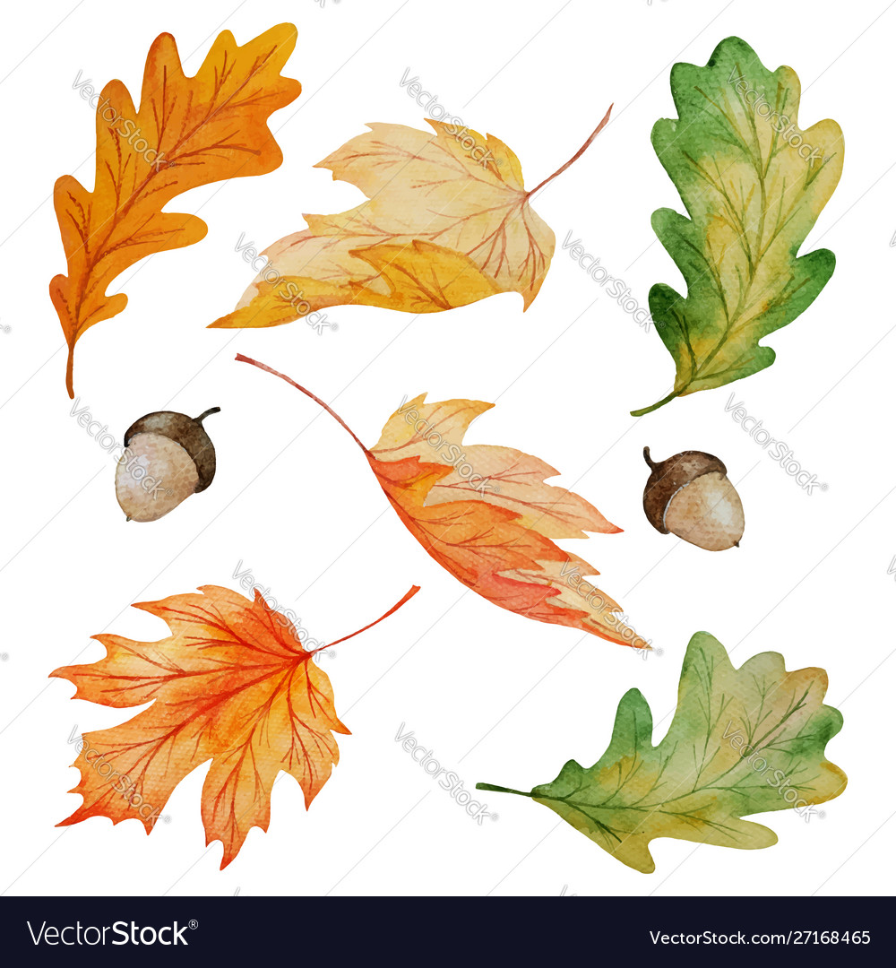 Maple and oak leaves collection