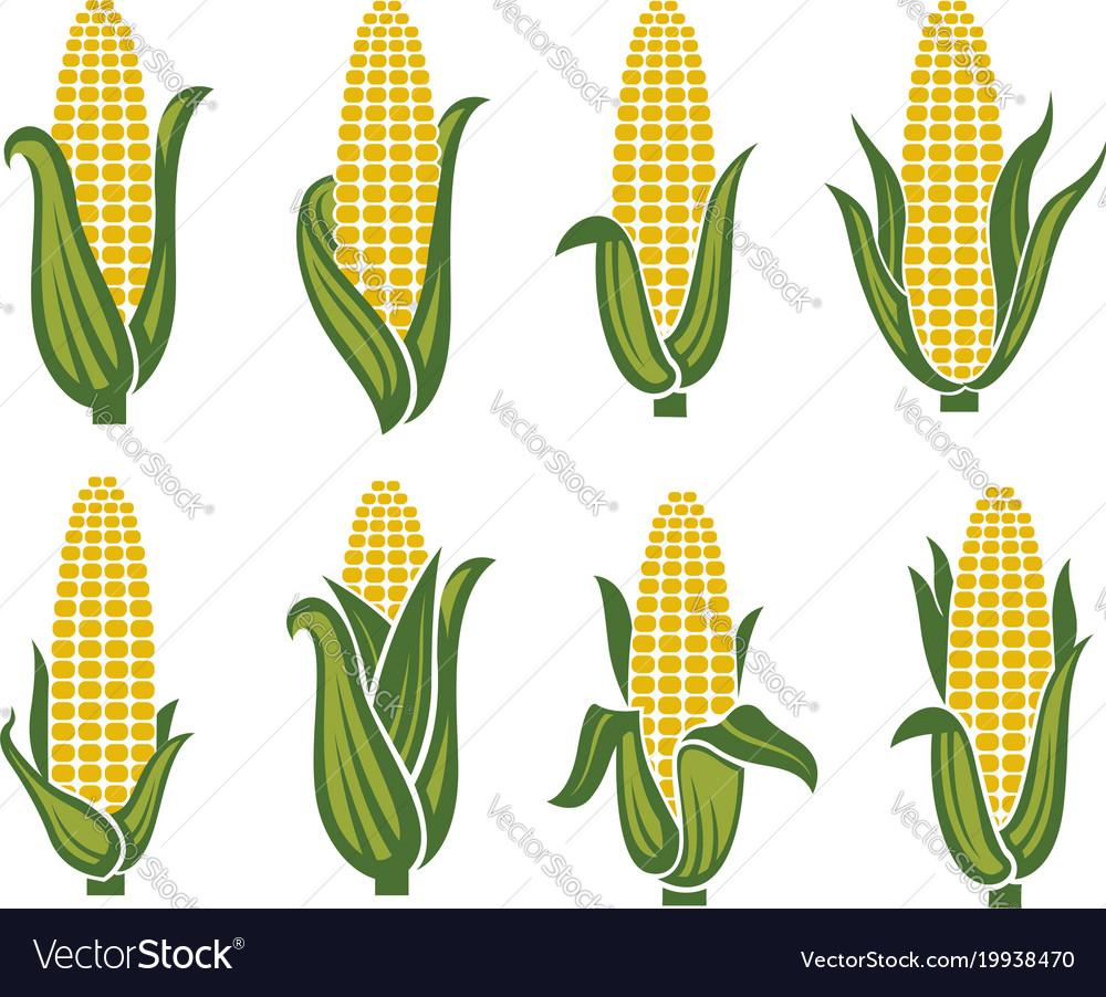 Corn images set